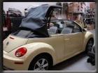 conv-top-3-beetle